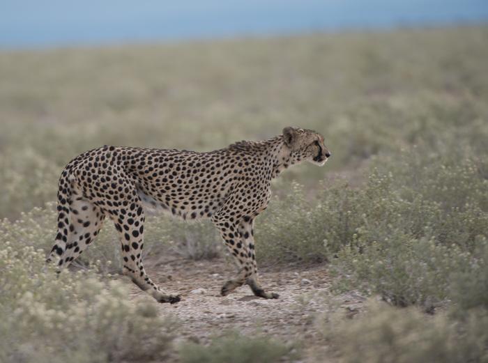 pack safari windhoek